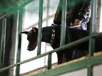 Выставка собак в Туле 14.04.19, Фото: 29