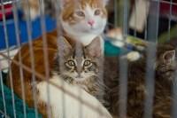 Выставка кошек в ГКЗ. 26 марта 2016 года, Фото: 43