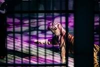 Шоу Lovero в тульском цирке, Фото: 35