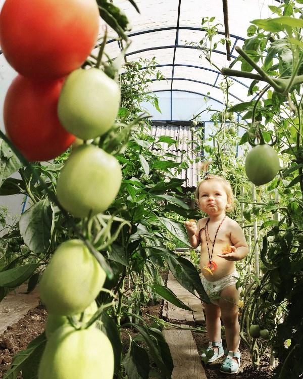 Саша проверяет помидоры на вкус
