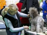 Выставка собак в Туле 14.04.19, Фото: 16