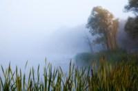 Центральный парк, утро, осень, Фото: 22