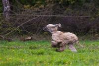 В Туле состоялись собачьи бега, Фото: 15