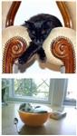 Коты спят где хотят, Фото: 1