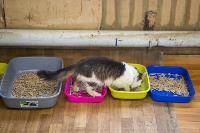 Волонтеры спасли кошек из адской квартиры, Фото: 23