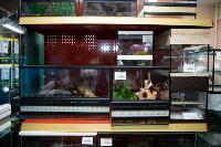 Животные: груминг и ветклиники, Фото: 20