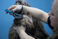 Животные: груминг и ветклиники, Фото: 39