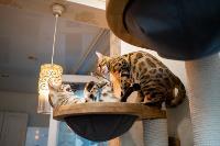 Экзотические животные в квартире, Фото: 52