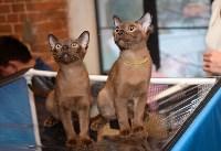 Выставка кошек в Искре, Фото: 2