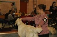 В Туле прошла всероссийская выставка собак, Фото: 16