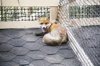 В Новомосковске открылся мини-зоопарк, Фото: 14