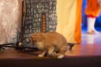 Театр кошек в ГКЗ, Фото: 33