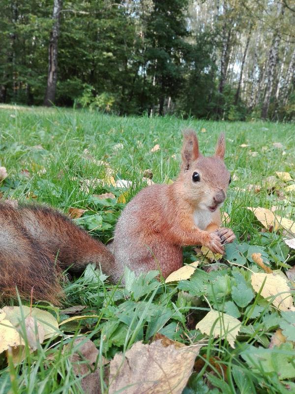 Осенняя белка