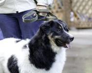 Рейд по выгулу собак в Центральном парке, Фото: 12