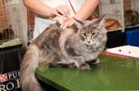 Выставка кошек в Искре, Фото: 48