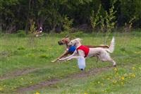 В Туле состоялись собачьи бега, Фото: 42