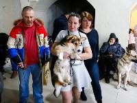 Выставка собак в Туле, Фото: 7
