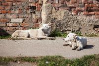 Дворняги, дворяне, двор-терьеры: 50 фото самых потрясающих уличных собак, Фото: 10