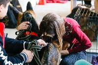 Выставка собак в Туле, Фото: 65