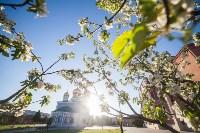 Яблони у кремля, Фото: 19