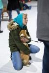 Выставка собак в Туле 14.04.19, Фото: 6