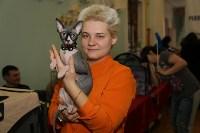 Выставка кошек. 21.12.2014, Фото: 13