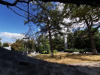 В Туле гибнут деревья, Фото: 33