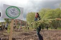 Высадка молодого леса, Фото: 38