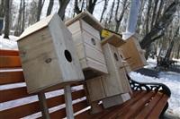 Птицы в городе. 26 февраля 2014, Фото: 5