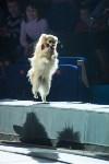 Тульский цирк, Фото: 25