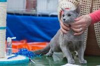 Выставка кошек в Туле, Фото: 51