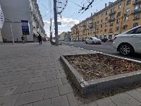 В Туле гибнут деревья, Фото: 12